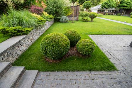 round boxwood bushes in decoration landscape design Stock Photo