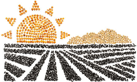 agricultural landscape with field and sun, the whole photo is laid out with sunflower seeds and corn with beans and poppy seeds Reklamní fotografie