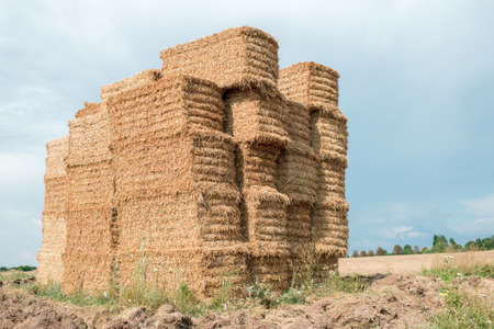 hay after harvest, stacks of straw bales of hay, farm farm fields with harvested crops.