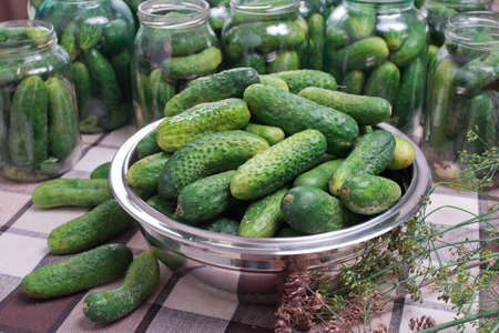 Delicious marinated cucumbers in a metal plate. Preparation of cucumbers for home canning pickles.