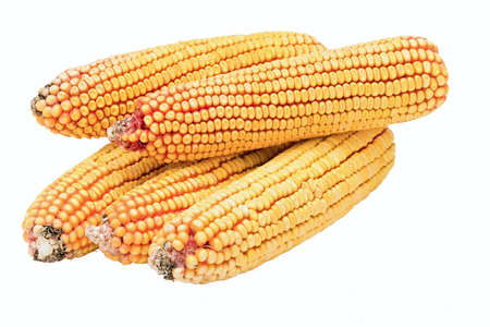 rinds of chopped ripe corn isolated on white background