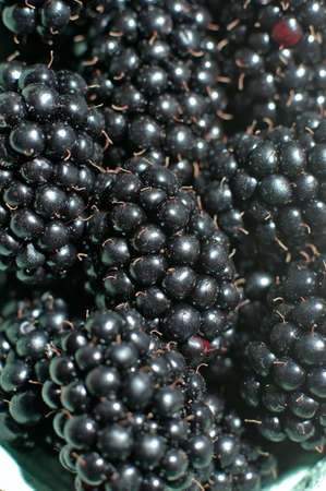 A beautiful fresh ripe red berries of raspberries close-up