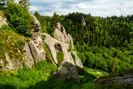 Green mountains in the summer of the Carpathians