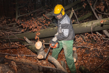 Woodcutter at work in the forest 2 photo