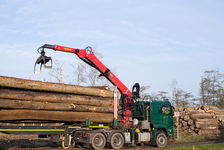 felling: Transport and loading of trees