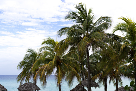 varadero: Beach View with Palms in Varadero Cuba
