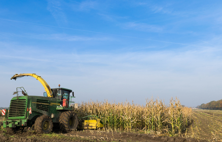 agricultural application tractor: Corn Harvest Machine on the field