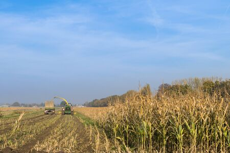 agricultural application tractor: Corn harvesting with tractor on the field