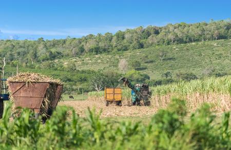 Sugarcane harvest on the field with a combine harvester in Santa Clara Cuba - Serie Cuba Reportage