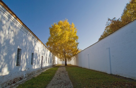 prison yard: Lonely birch in the prison yard. Old monastery in Russia, Suzdal.