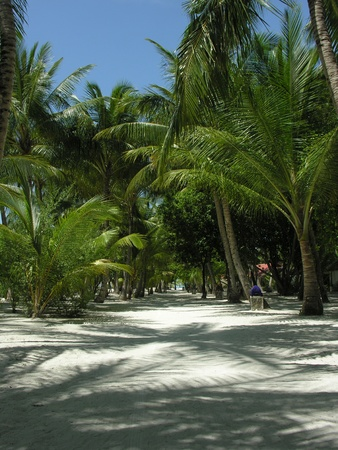 Palm Alley in the Maldives, Kani island