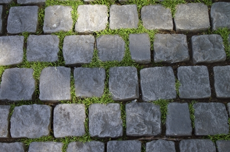 Grass makes its way through the cobblestone pavement. photo