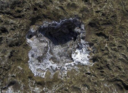 crystallize: Crystallization of salt on the rocks  Black Sea