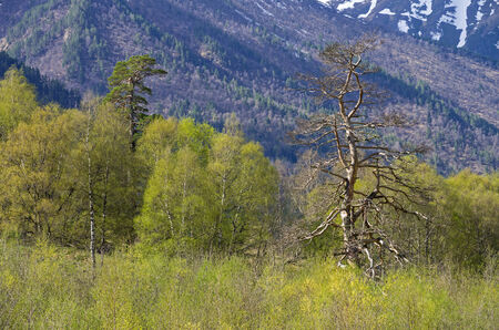 frondage: Spring in the Caucasus mountains  Aksaut Gorge, Russia Stock Photo