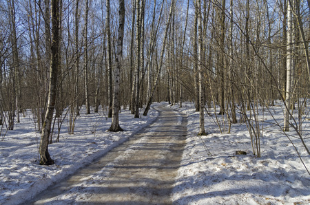 weather gauge: A dirt road in the spring forest on a clear sunny day.
