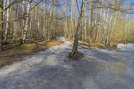 hillside: Spring forest, melting snow on the hillside