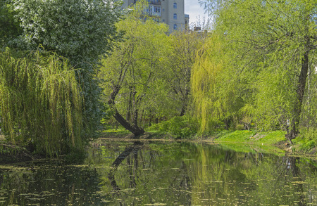 waterside: A quiet corner of the old city pond. Early May. Botanical garden in the center of Moscow.