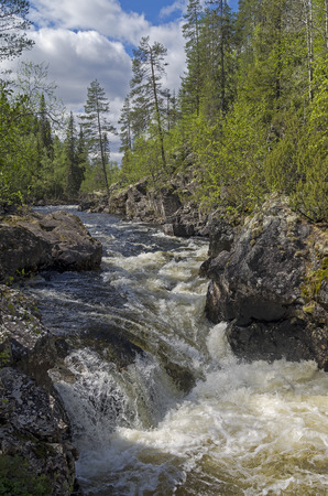 narrowly: Rapids with waterfall on  the mountain river Vuosnayoki,  the border of the Murmansk region and Karelia, Russia.