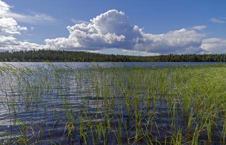 karelia: Pista River on a sunny summer day. Karelia, Russia.