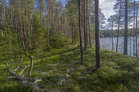 karelia: Shore of a forest lake. Karelia, Russia.