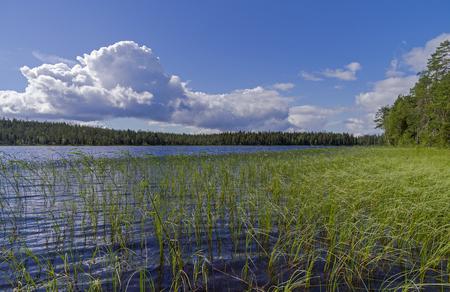 pista: Pista River on a sunny summer day. Karelia, Russia.