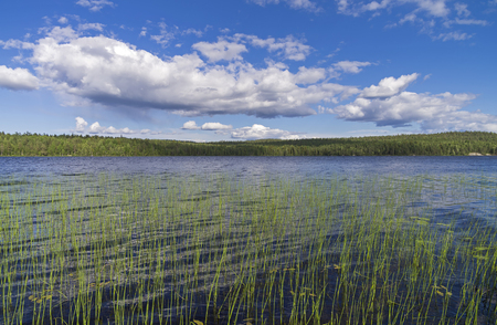 pista: Clouds over the lake. Sunny summer day. Karelia, Russia.