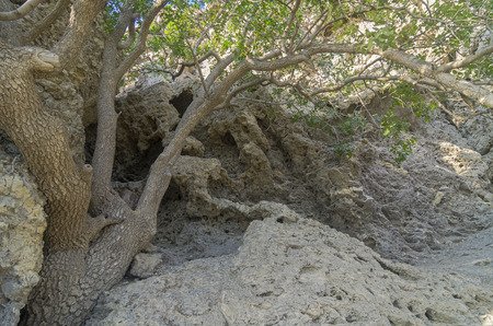 outgrowth:  coral deposits. Crimea, the Black Sea coast.