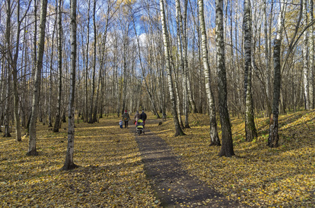 frondage: Walking path in the park. End of october. Moscow, Russia.