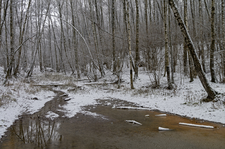 blanch: The mouth of a small forest stream. Late autumn, the end of November. Forest park in Moscow.
