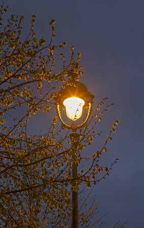 portrait orientation: Single old-fashioned lantern in the branches of a tree against the evening sky. Portrait orientation. Paris, France.