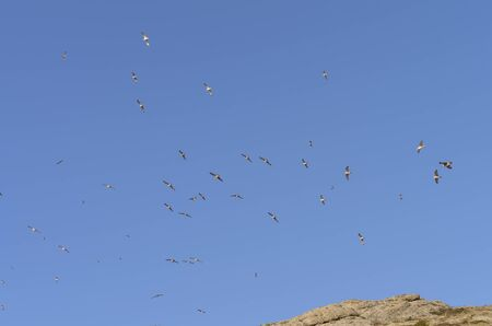 is cloudless: Gulls high in a blue cloudless sky over the top of the mountain.