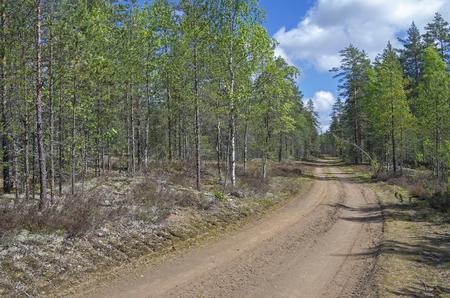 karelia: Forest road. Sunny day in June. Uksun Riverside, Karelia, Russia.