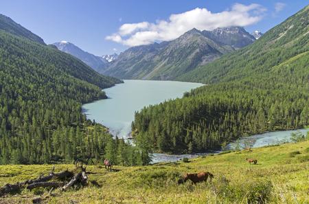 cusp: Kucherla lake. Altai Mountains, Russia. Sunny summer day. Stock Photo