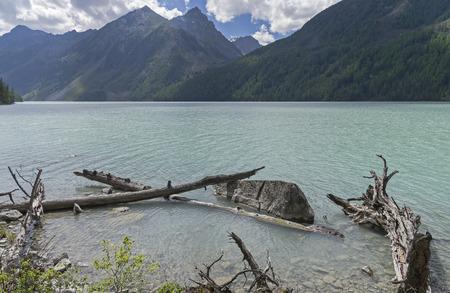 cusp: Snags near the shore. Kucherla lake. Altai Mountains, Russia. Sunny summer day.