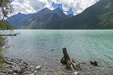 Stump in the water near the shore of the lake. Kucherla lake. Altai Mountains, Russia. Sunny summer day. Stock Photo