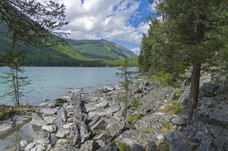 Log on the lake shore. Kucherla lake. Altai Mountains, Russia. Sunny summer day.