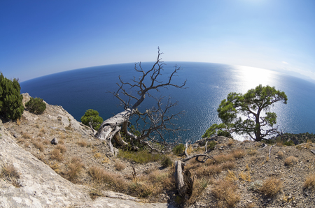relict: Dead relict pine on the background of the sea. Fish Eye lens view. Crimea; September. Stock Photo