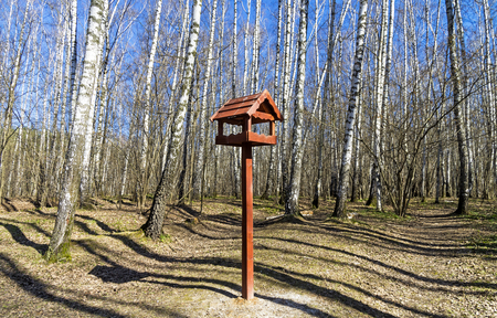 Wooden bird feeder in the birch forest. Forest Park Troparevo, Moscow. Sunny day in April.