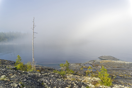 The trunk of a dry pine against a background of thick fog. The shore of Lake Ladoga. Karelia, Russia. Early June