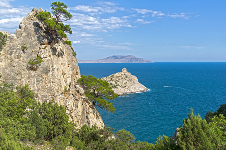 Relict pines and junipers on the coastal rocks. Crimea, Novyy Svet, Karaul-Oba.