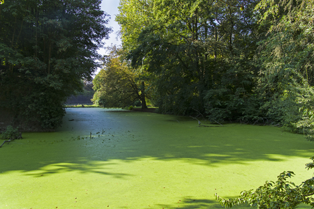Moat with water overgrown with a duckweed pond at the walls of Citadel of Lille. Sunny day at the end of August.