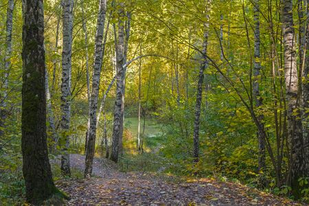 Small overgrown lake in the autumn forest. Sunny day in October. Landscape reserve Teply Stan, Moscow, Russia.