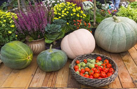Autumn Exhibition of Agricultural Products. Composition of pumpkins of various sizes, shapes and colors
