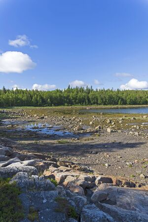 The littoral zone at low tide. The shore of the White Sea. Kandalaksha Gulf, Karelia, Russia, end of June.