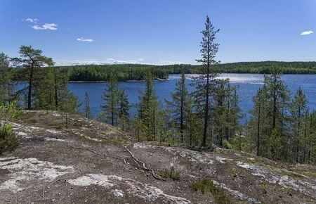 Pine trees on the high rocky shore of the White Sea. Kandalaksha Gulf, White Sea, Karelia, Russia, end of June.