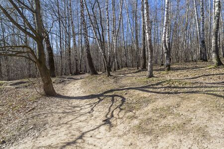 """Shadow from a tree on the slope of a ravine. Landscape reserve """"Teply Stan"""", Moscow, Russia, mid-April, sunny day."""