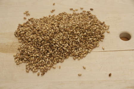 Close up view of organic Barley on a board