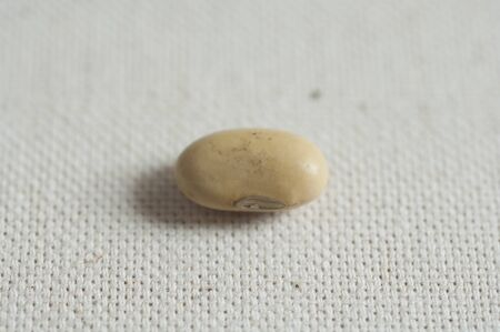 Close-up view of Italian organic Yellow beans