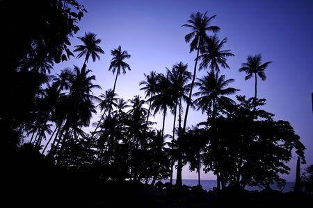 Coconut tree at sunrise - Kao mak, Thailand Stock Photo - 9550445