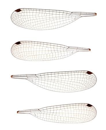 네 잠자리 날개 세트는 생물과 요정과 물건을 만드는 데 유용 할 수 있습니다